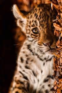 Baby Jaguar Baby Jaguar Cats Friends