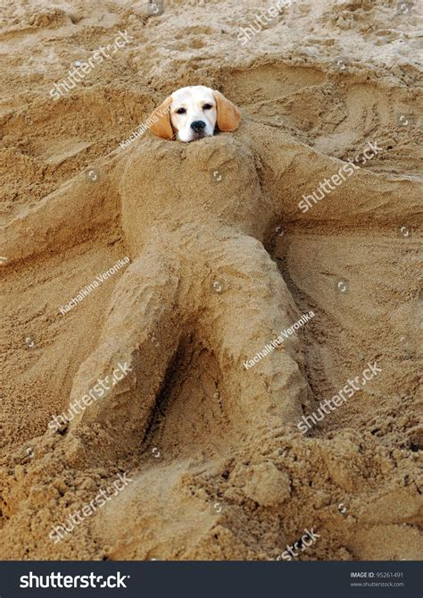 sand puppy buried sand stock photo 95261491