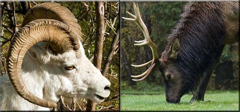 Horns And Antlers what is the difference between antlers and horns