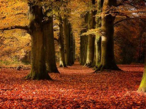 imagenes hd bosques 32 fondos hd bosques impresionantes para tu escritorio