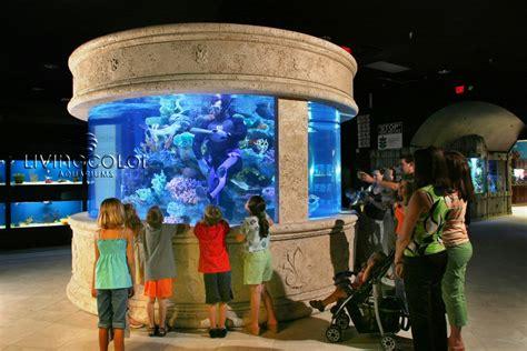 living color aquarium living colour aquariums 1000 aquarium ideas