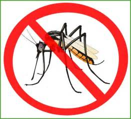 Best Backyard Mosquito Control How To Get Rid Of Mosquitoes In The Backyard Backyard