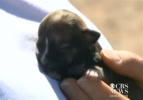 aborted puppies california puppy beyonce vs survives escaped death 4