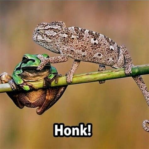 Reptile Memes - pinterest the world s catalog of ideas