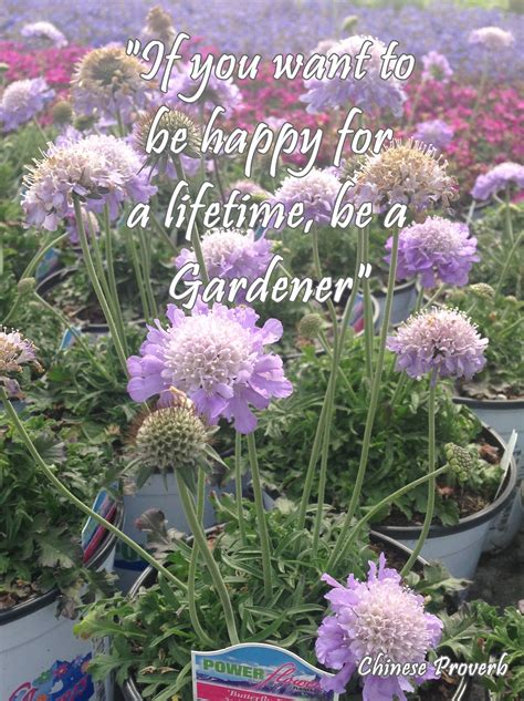 Power Flowers Our Favorite Gardening Quotes Flower Garden Quotes