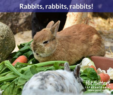 8 Tips On Caring For Pet Rabbits by Caring For Your Pet Rabbit