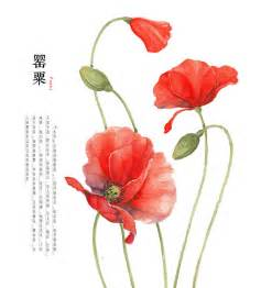 hand drawing watercolor plants poppy by galoshining on
