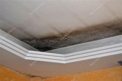 muffa soffitto muffa sul soffitto foto stock 169 oraziopuccio 64844439