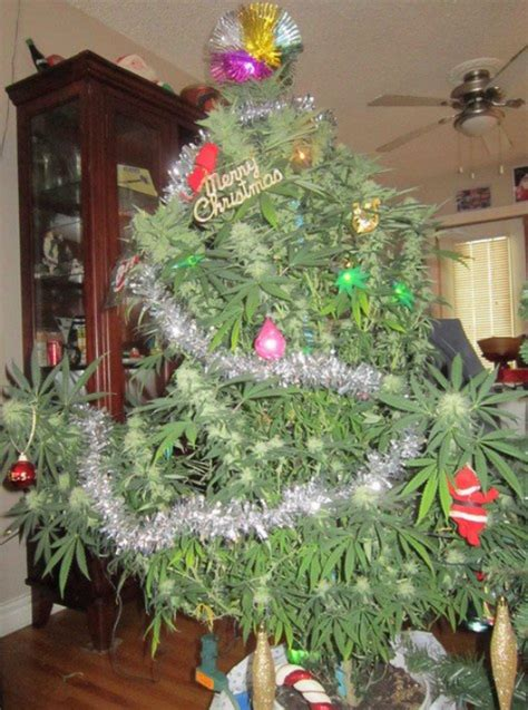 pot plants pictures man s christmas tree is