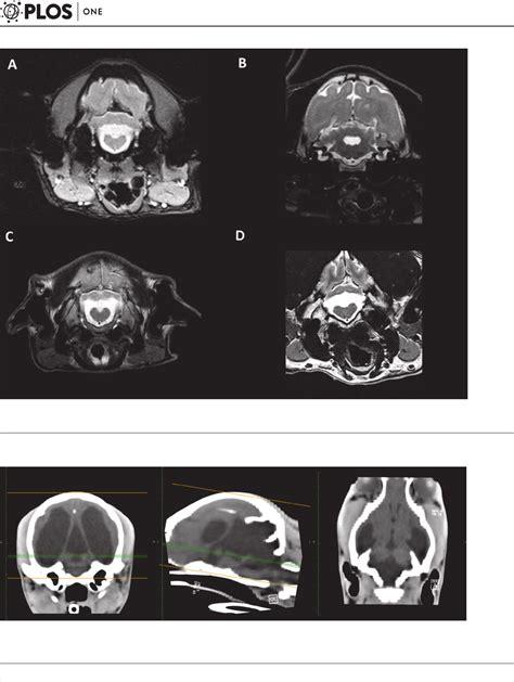 cerebellar hypoplasia in dogs inferior cerebellar hypoplasia resembling a dandy walker like malformation in purebred