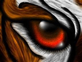 tiger eye by amu23m1 on deviantart