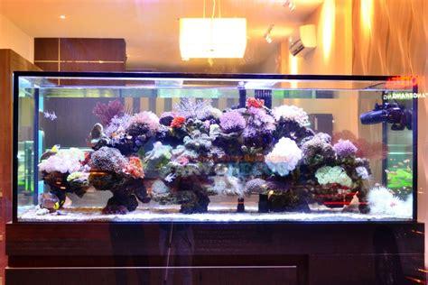 Bibit Rumput Air Dekorasi Aquarium akvodecor aquarium laut aquarium tawar dekorasi aquarium pembuatan kolam koi aquarium