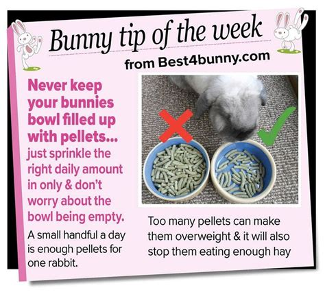 Must For The Week The House Bunny by 11 Best Rabbits Tricks Hacks Tips Images On