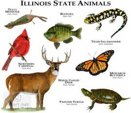of illinois colors illinois state animals illinois state animals color