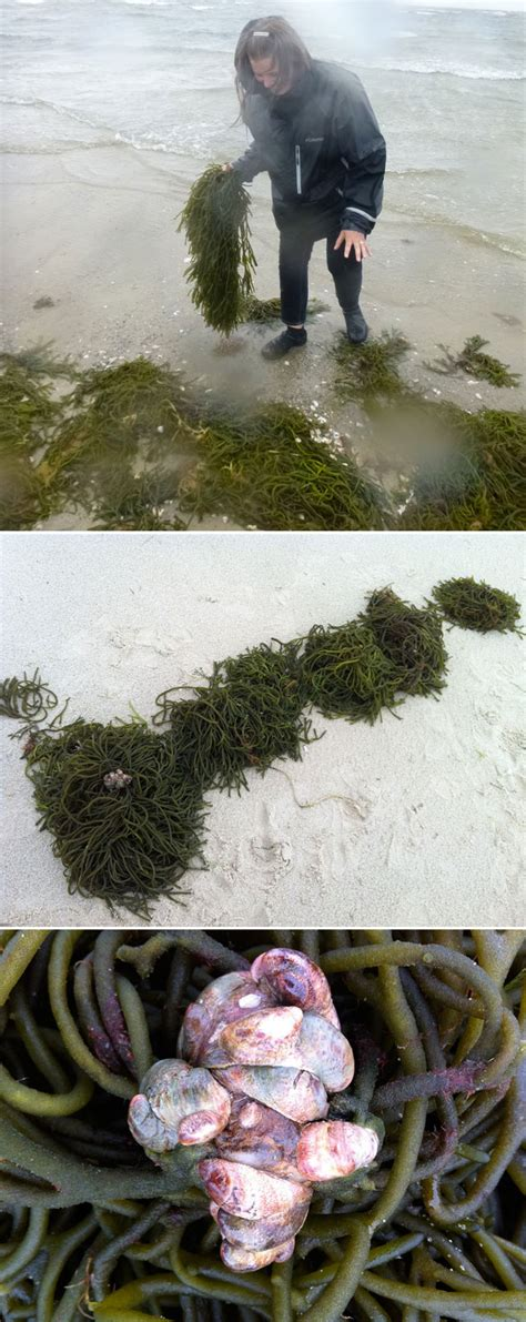 Paper From Plants - paper from seaweed papermaking with atlantic