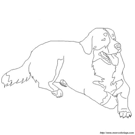 coloring pages of bernese mountain dogs coloring dogs page bernese mountain dog