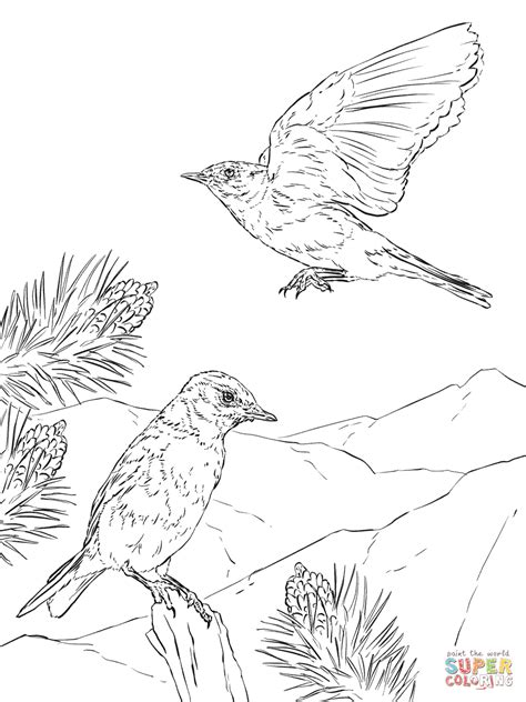 Mountain Bluebird Coloring Page Free Printable Coloring Bluebird Coloring Page