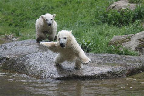 Zoologischer Garten öffnungszeiten by Zoo M 252 Nchen Tierpark Hellabrunn Tiergaerten De