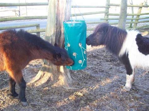 langeweile spiele futter spiel gegen langeweile pferd kuh besch 228 ftigung