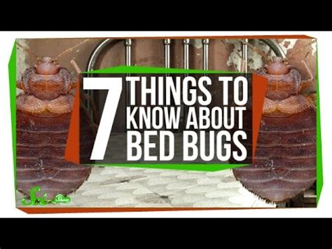 7 Things You Need To About Bedbugs by 7 Things You Should About Bed Bugs