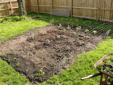 starting a backyard garden starting a backyard vegetable garden wvdxxx decorating clear