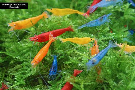 how to aquascape how to an aquascape 19 images 2013 aga aquascaping