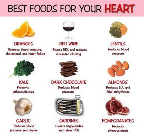 food the best nutrition for your four legged friend books pensioners voice sound track editor r k sahni this