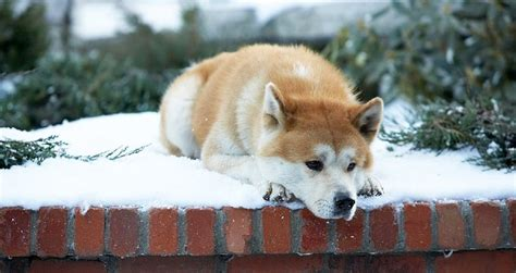 a dogs tale hachi a s tale quotes archives from a