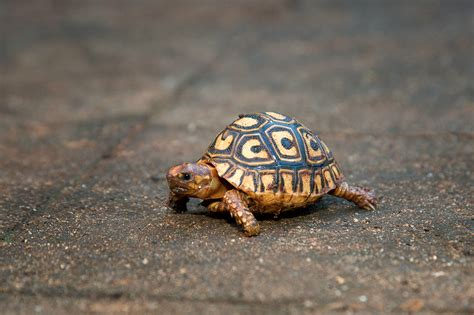 backyard tortoise iliauneli 4 out of 5 dentists recommend this wordpress