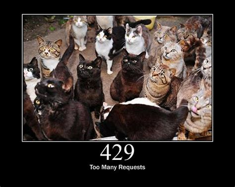429 Too Many Requests | 429 too many requests flickr photo sharing