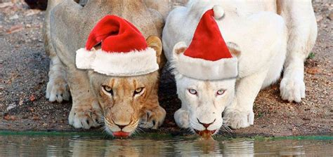 mashujaa jamhuri pre xmas christmas  year packages bonfire adventures blog