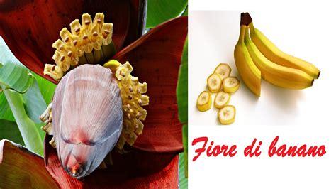 fiore di banano fiore di banano il rimedio naturale per asma tosse e