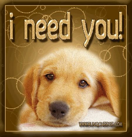 i need a puppy 70 i need you pictures and photos