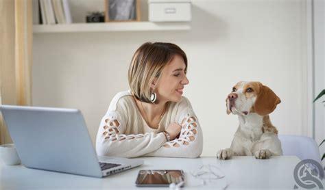 grooming courses 5 ways pet grooming courses will make your happier qc pet studies