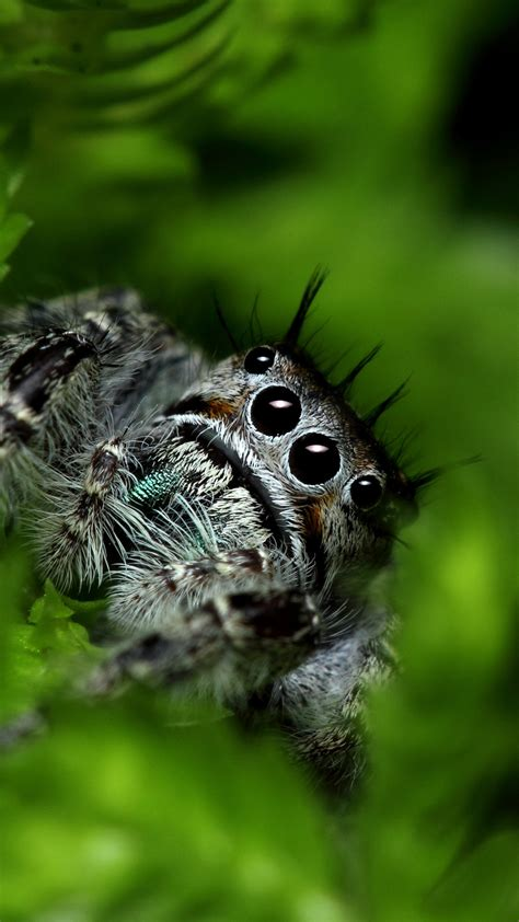 wallpaper jumping spider eyes insects leaves green