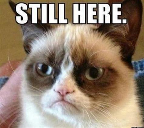 Tard The Cat Meme - grumpy cat apocalypse tard the cat parody accounts