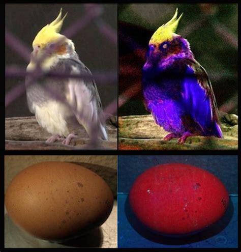 bird brainz