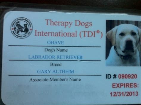 therapy international 17 best images about therapy dogs on vests costumes and therapy dogs