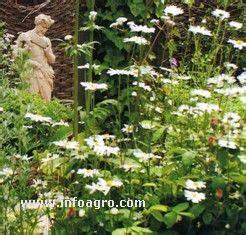imagenes jardines romanos foto de jardin romano
