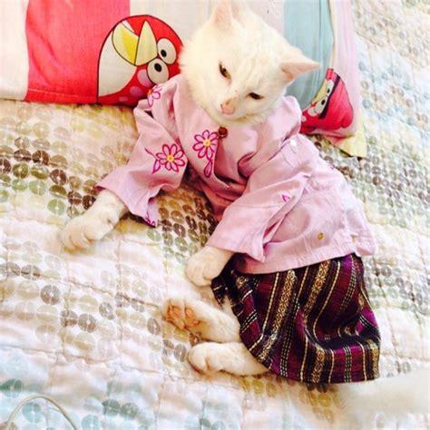 jual baju untuk kucing baju kucing menjual baju kucing biodata baju kurung