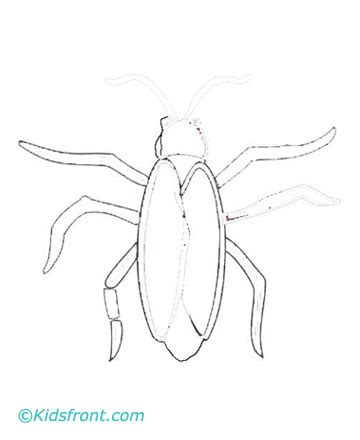 Cockroach Drawing Cockroach Coloring Pages
