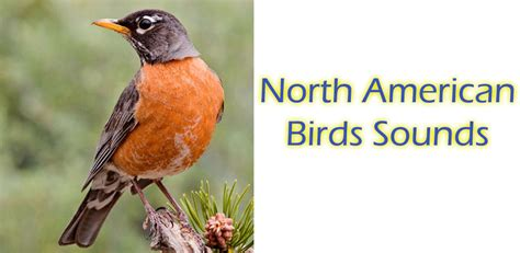 north american birds sounds amazon ca appstore for android