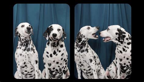 imagenes de animales jpeg perros posando en un photo booth es lo m 225 s tierno que