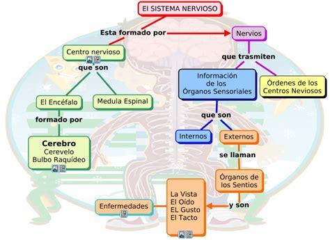 imagenes de organos sensoriales mapa el sistema nervioso