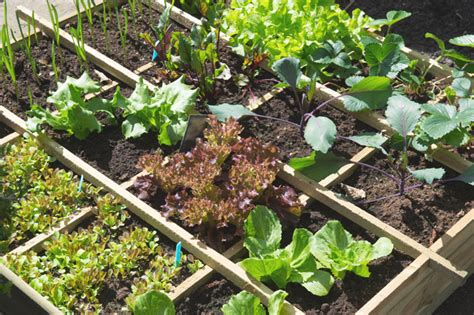 The Seasoned Homemakerhow To Start A Vegetable Garden Starting A Small Vegetable Garden