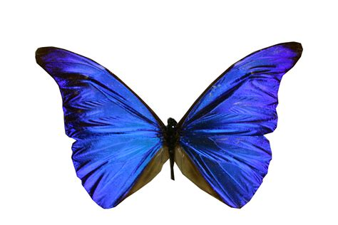 butterfly colors leaves and butterflies colours clipart best clipart best