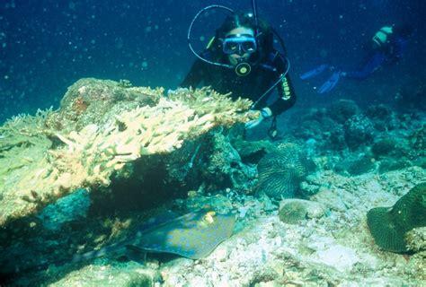 dive sea tour 2 diving to the dahlak islands explore eritrea