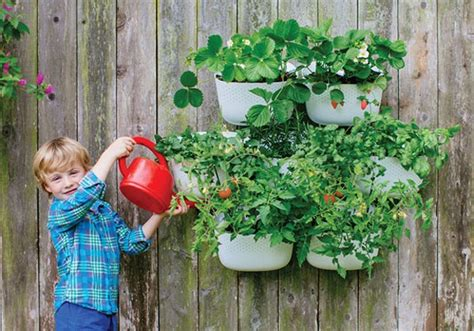 Wooly Pocket Living Wall Planter by Scouted Living Wall Planters We Are Scout