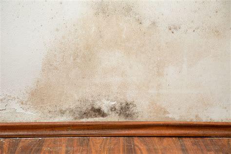 eliminare la muffa dai muri interni rimedi naturali muffa muri non sprecare
