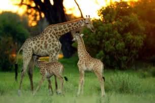 trabalho de geografia  continente africano!: riquezas